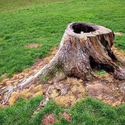 Как выкорчевать дерево на садовом участке?