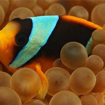 Как рыба мечет икру? Все ли рыбы мечут икру?
