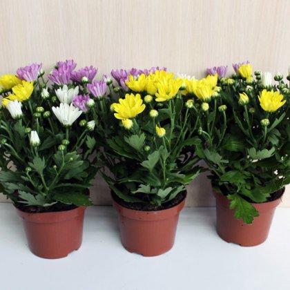 исследовательская работа вегетативное размножение комнатных растений