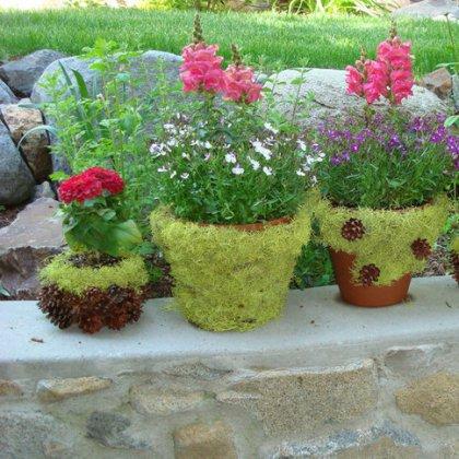 Как сажать цветок в горшок, как правильно сажать цветы в горшок?