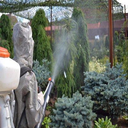 Весенние опрыскивание деревьев: как обрабатывать персики?