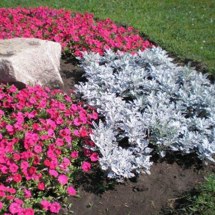 Схема как посадить цветы 125