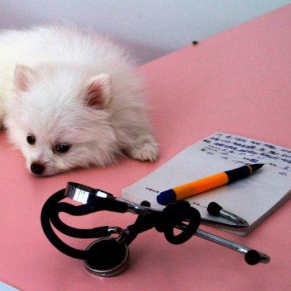 Как вызвать скорую ветеринарную помощь?