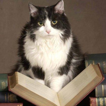 Как написать рассказ о животном?