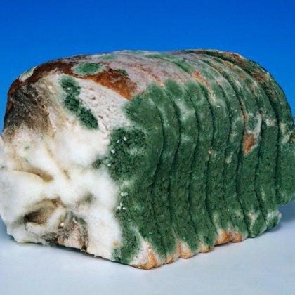 Как развивается плесень на хлебе?