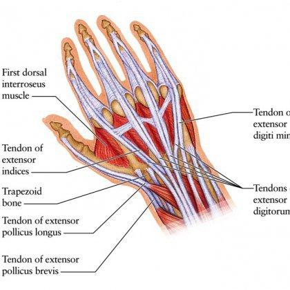 Как растянуть сухожилия кисти?