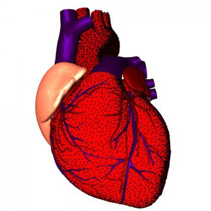 Как следует беречь свое сердце - InfoSMI net