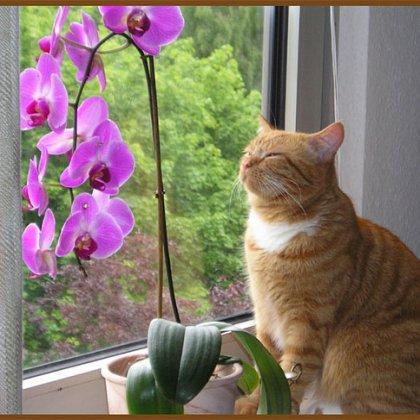 Как ухаживать за цветами орхидеями?