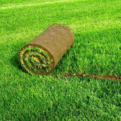 Как вырастить рулонный газон?