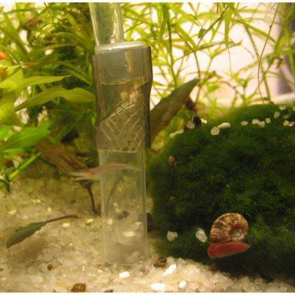 Как сделать сифон для аквариума: самые интересные варианты