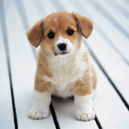 Как уговорить родителей купить собаку на день рождение?