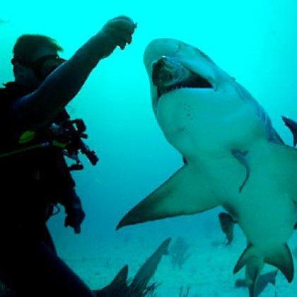 Как человек может спасти акулу?