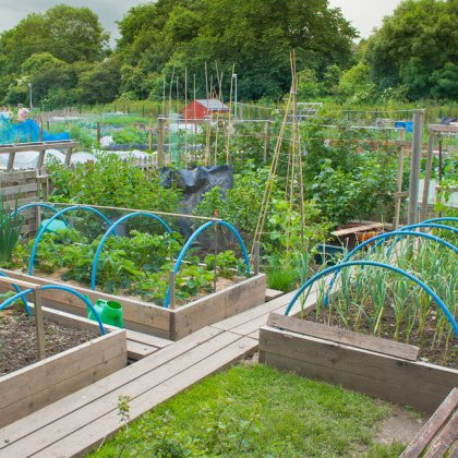 Огород как сделать его красивым 101