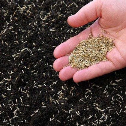 Как правильно сажать газонную траву?