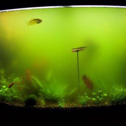 Как бороться с зелеными водорослями?