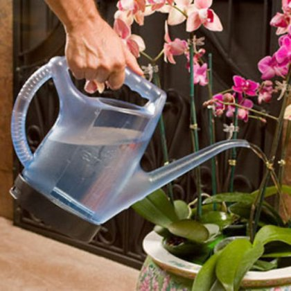 Как поливать домашнюю орхидею: способы полива
