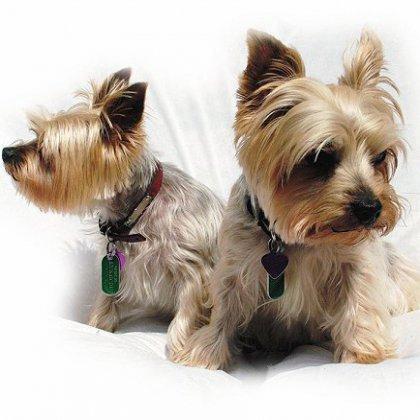 Как стричь машинкой собаку в домашних условиях?