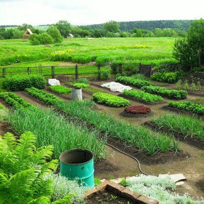 Как расположить грядки на огороде: практические советы
