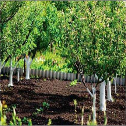Как правильно посадить рябину в саду: выбор места