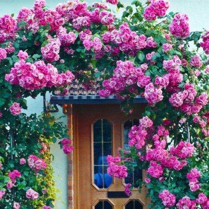 Как украсить дом розами ?