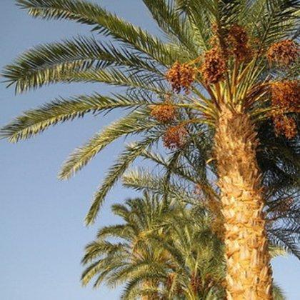 Как растут пальмы на юге?