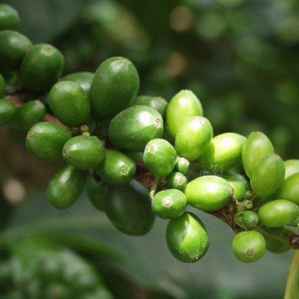 Кто еще хочет купить зеленый кофе в Омске?