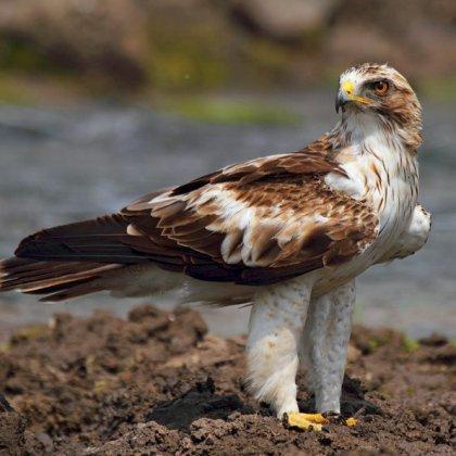 здоровое питание орел