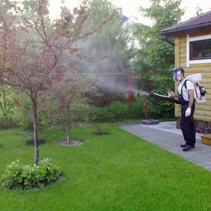 Как делается опрыскивание деревьев медным купоросом?