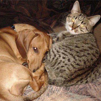 Как предотвратить болезни у домашних животных?