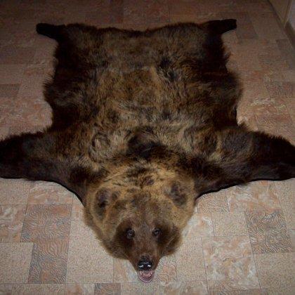 Как выделать шкуру медведя?