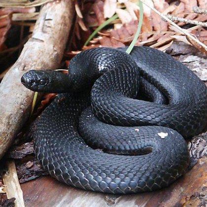 Как избавиться от змеи на участке?