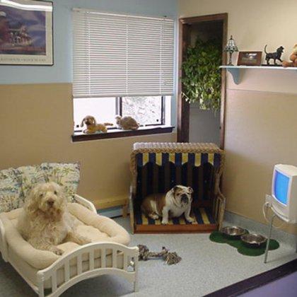 Как обустроить комнату для собаки?