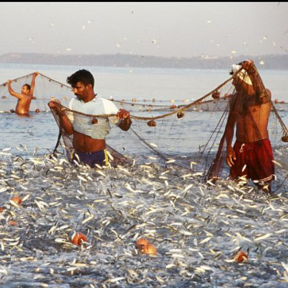 рыбаки взяли сети