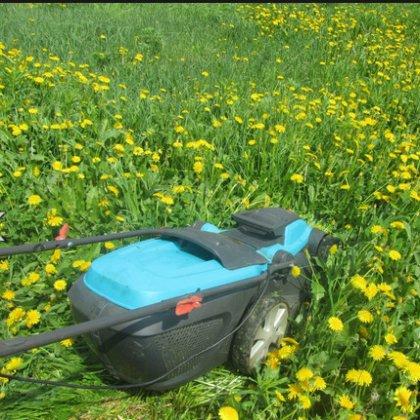 Как избавиться от одуванчиков в огороде?