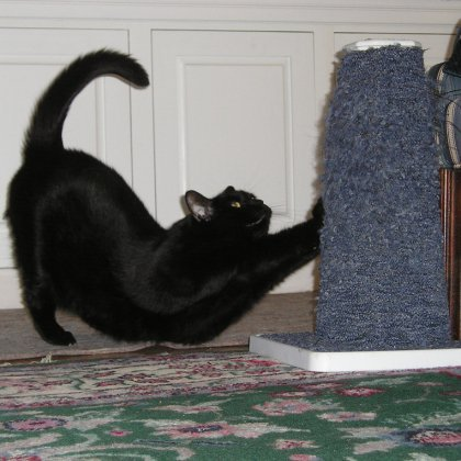Как сделать так чтобы кот обои не драл