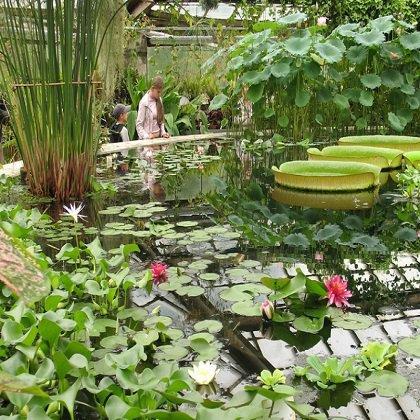 Как купить растения в ботаническом саду?
