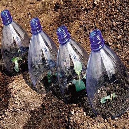 Как сеять огурцы для раннего урожая?