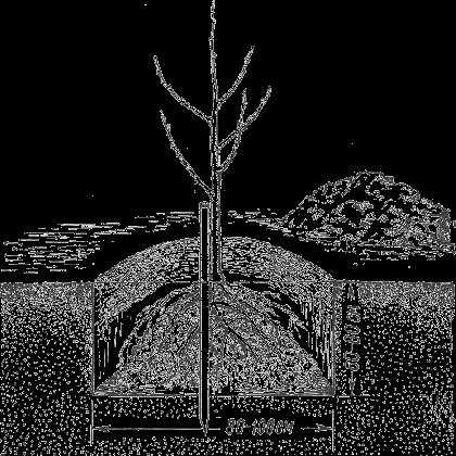 Схема посадки яблонь