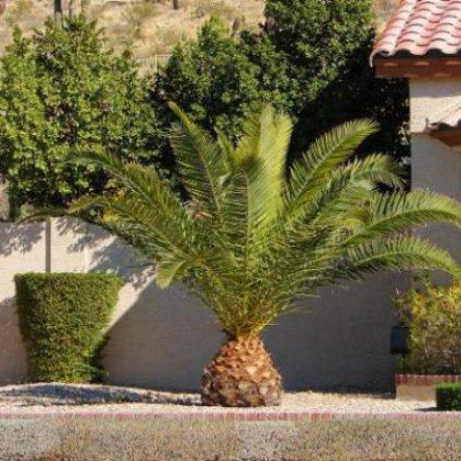 Как вырастить пальму на даче?