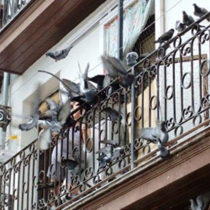 Как отпугнуть голубей с балкона?