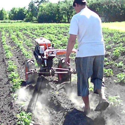 Как окучивать картофель мотокультиватором?