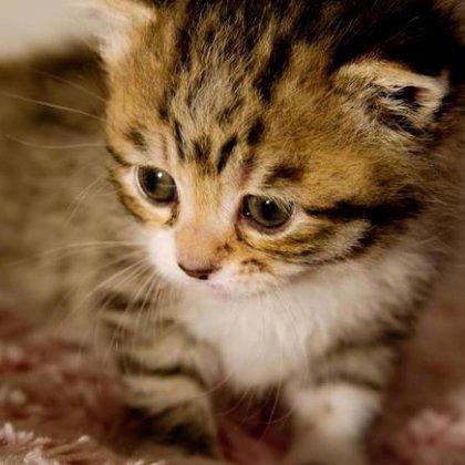 Как определить признаки глистов у котят?
