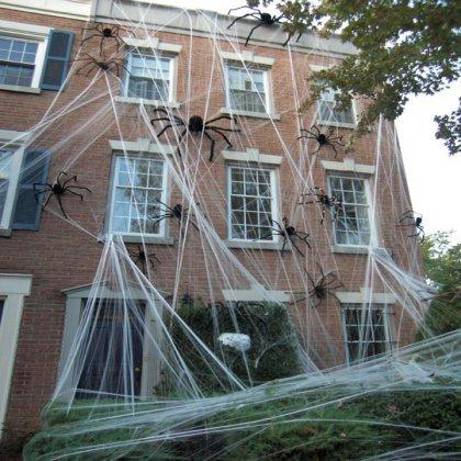 Как избавиться дома от пауков?